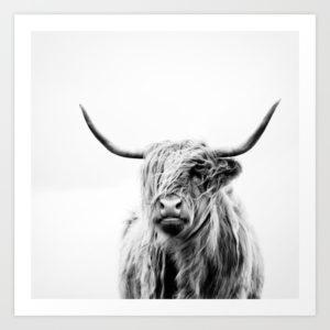 """""""Portrait of a highland cow"""" par Dorit Fuhg"""